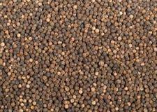 Grãos de pimenta crus, naturais, não processados da pimenta preta Imagem de Stock