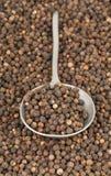 Grãos de pimenta crus, naturais, não processados da pimenta preta no spoo do metal Foto de Stock