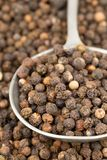 Grãos de pimenta crus, naturais, não processados da pimenta preta no spoo do metal Imagens de Stock