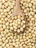 Grãos de soja Imagens de Stock Royalty Free