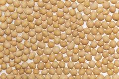 Grãos de soja Imagem de Stock