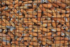 Grãos secos no silo: Exploração agrícola do milho fotos de stock