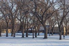 Gränd av gammala almtrees på universitetaruniversitetsområdet Royaltyfri Foto