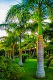 Gränd av palmträd på en tropisk ö arkivbilder