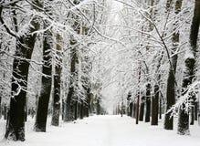 Gränd av träd med filialer som täckas med snö royaltyfria bilder