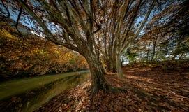 Gränd av träd nära floden Arkivbild
