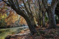 Gränd av träd nära floden Arkivfoto