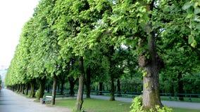 Gränd av trees Royaltyfria Foton