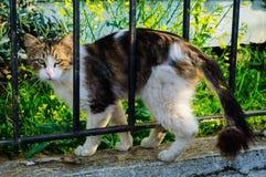 Gränd Cat Among The Fence Arkivfoto