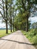 Gränd för landsväg som tänds av aftonsolen Fotografering för Bildbyråer