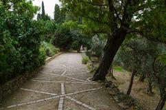 Gränd i botanisk trädgård arkivbild