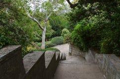 Gränd i botanisk trädgård royaltyfria foton