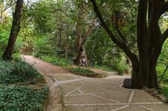 Gränd i botanisk trädgård royaltyfri bild