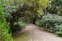 Gränd i botanisk trädgård royaltyfria bilder