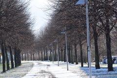 Gränd i en vinterstad De träd tappade sidorna och ställningen med kala filialer mot slösar klar himmel Royaltyfria Foton