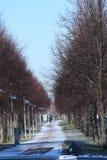 Gränd i en vinterstad De träd tappade sidorna och ställningen med kala filialer mot slösar klar himmel Arkivbilder