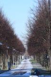 Gränd i en vinterstad De träd tappade sidorna och ställningen med kala filialer mot slösar klar himmel Royaltyfri Bild