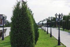 Gränd i parkera, med ett landskap av barrträds- buskar royaltyfri foto