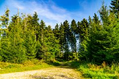 Gränd i skog arkivbild