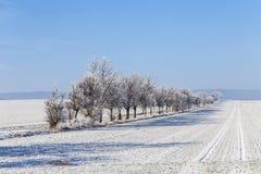 Gränd i vinterlandskapet som täckas med snö Royaltyfri Bild