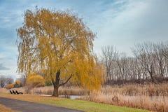 Gränden i höststad parkerar Orange lövverk Arkivbilder