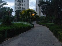 Gränden parkerar med gula blommande träd på sidan med en tänd stadslampa i avståndet och de högväxta byggnaderna royaltyfria foton