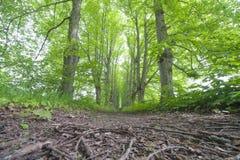 grändgreen arkivbilder