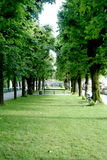 grändtrees Royaltyfria Foton