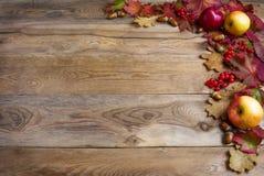 Gräns av äpplen, ekollonar, röda bär och nedgångsidor på det gammalt Royaltyfri Fotografi