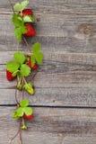 Gräns av nya jordgubbar Arkivfoton