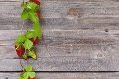 Gräns av nya jordgubbar Fotografering för Bildbyråer