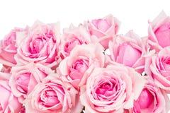 Gräns av rosa färgträdgårdrosor Royaltyfri Bild