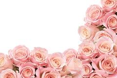 Gräns av rosor med utrymme för text royaltyfri foto