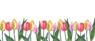 Gräns av tulpan på vit bakgrund med vattenfärgen vektor illustrationer