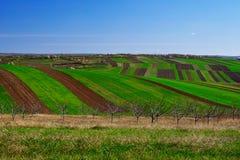 Gräns fält mellan en gräsplan och för en brunt Royaltyfria Foton