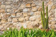 Gräns för gräs för vägg för sten för inlagd kaktusväxt gammal arkivfoto