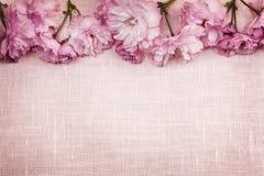 Gräns för körsbärsröda blomningar på rosa linne Royaltyfria Bilder