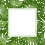 Gräns för kort för baner för PhilodendronMonstera blad också vektor för coreldrawillustration royaltyfri illustrationer