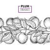 Gräns för tappning för plommonfilial sömlös Hand dragen isolerad frukt stock illustrationer