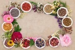 Gräns för växt- medicin Royaltyfria Bilder