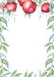 Gräns för vattenfärggranatäpple (granatrött) royaltyfri illustrationer