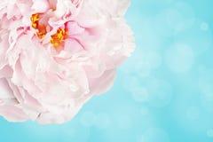 Gräns - rosa färgblomma över ljus - blått Royaltyfria Bilder