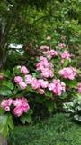 Gräns - rosa färgblomningar royaltyfri bild