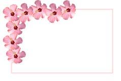 gränsad rosa placecardwhite för blommor Royaltyfria Foton