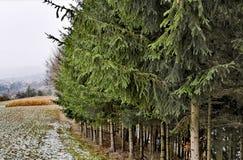 Gränsen av den barrträds- välden royaltyfri bild