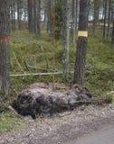Gränsen av område, markera av forestlanden Fotografering för Bildbyråer
