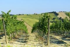 Gränser (Italien): sommarlandskap Royaltyfri Bild