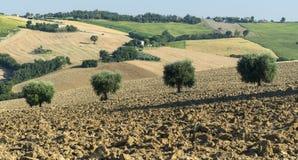 Gränser (Italien): sommarlandskap Royaltyfria Foton