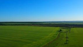 Gränslös grön risfält mot avlägsen by vid bildmässiga kullar lager videofilmer