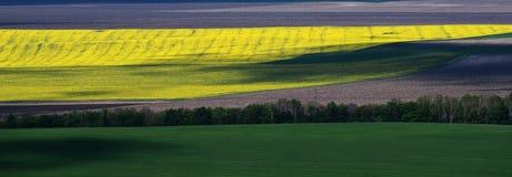Gränslösa gula, gröna och gråa fält som avskiljs av träd arkivbild